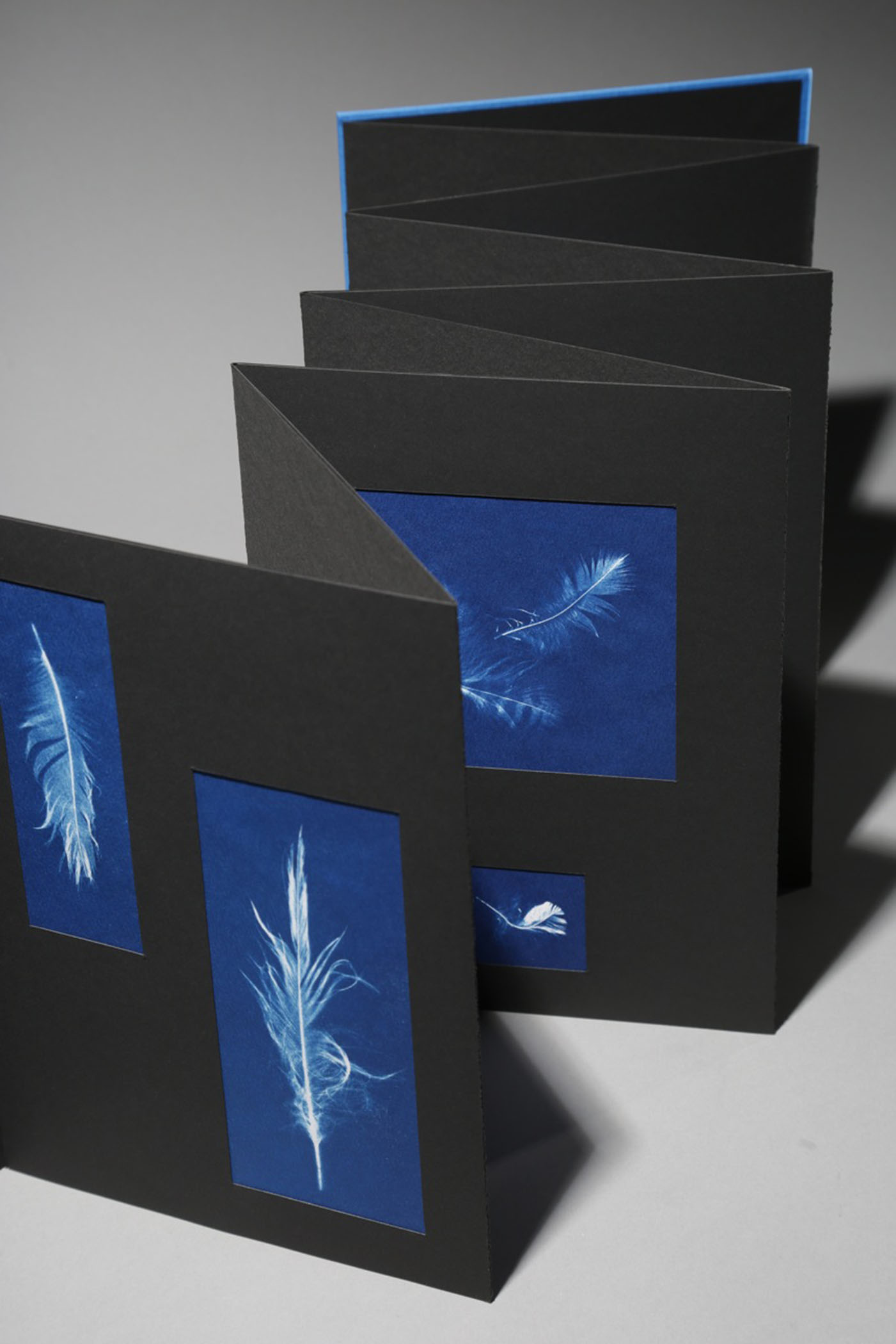 Sande Wascher-James, Anna's Feathers, Book of 18 cyanotypes on watercolor paper